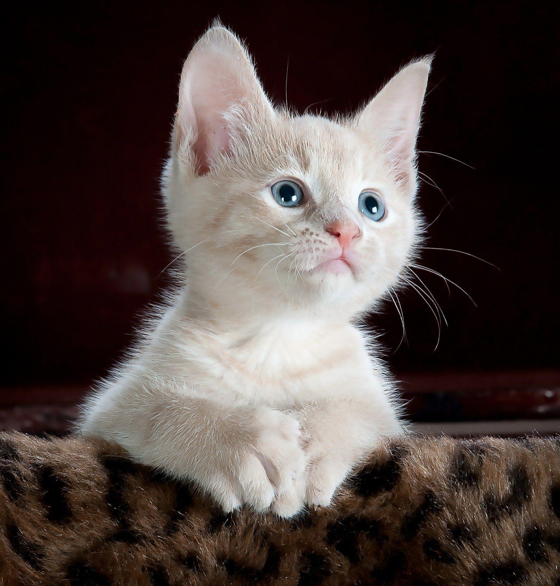 kitty-551554_1920